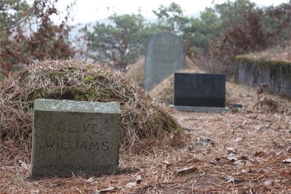 olivewilliams